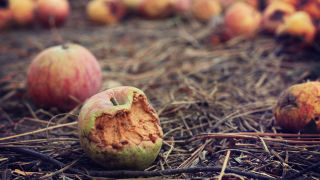 Photo of rotten apples on the ground