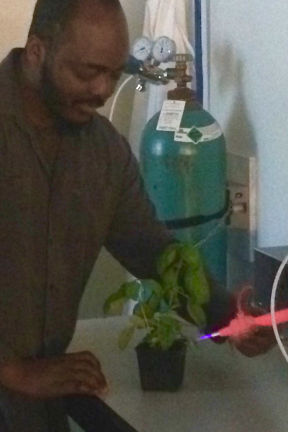 Chemistry Ph.D. candidate Sauvelson Auguste working with sweet basil.