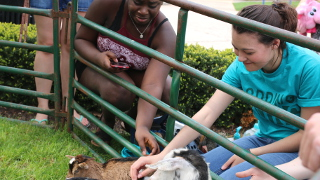 Students petting animals through a fence.