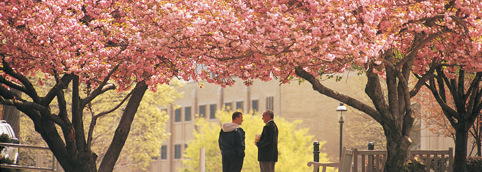 Faculty members talking under a canopy of pink trees.